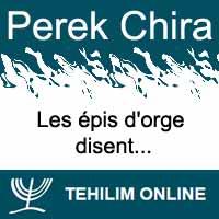 Perek Chira : Les épis d'orge disent