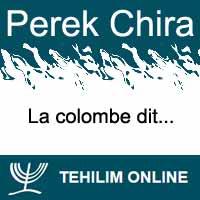Perek Chira : La colombe dit