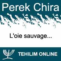 Perek Chira : L'oie sauvage