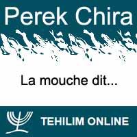 Perek Chira : La mouche dit