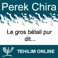 Perek Chira : Le gros bétail pur dit