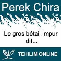 Perek Chira : Le gros bétail impur dit