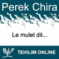 Perek Chira : Le mulet dit