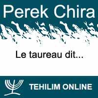 Perek Chira : Le taureau ou le bœuf dit