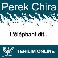 Perek Chira : L'éléphant dit