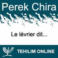 Perek Chira : Le lévrier dit